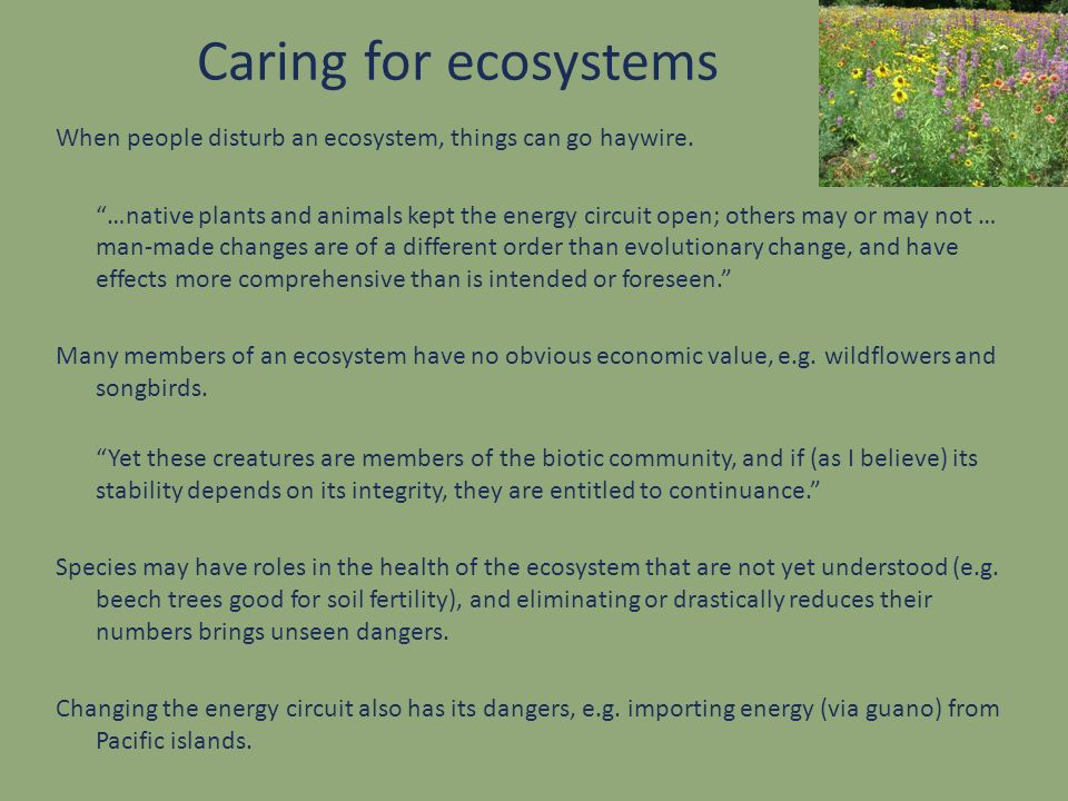 Caring for ecosystems