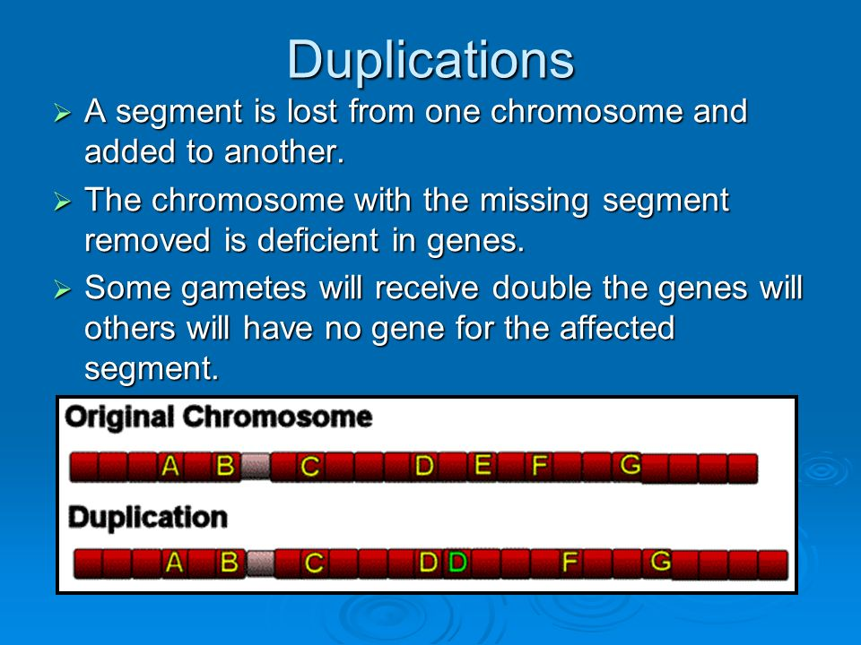 Duplications A segment is lost from one chromosome and added to another. The chromosome with the missing segment removed is deficient in genes.
