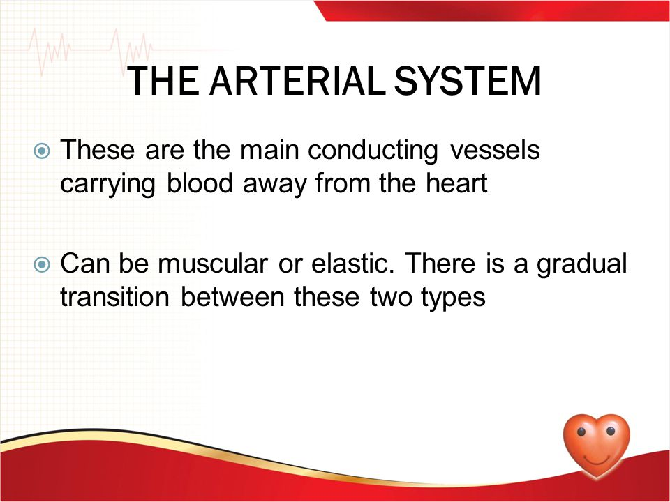 THE ARTERIAL SYSTEM These are the main conducting vessels carrying blood away from the heart.