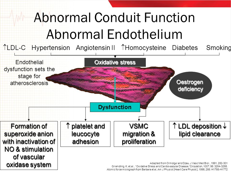 Abnormal Conduit Function Abnormal Endothelium