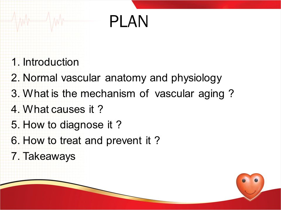 PLAN 1. Introduction 2. Normal vascular anatomy and physiology