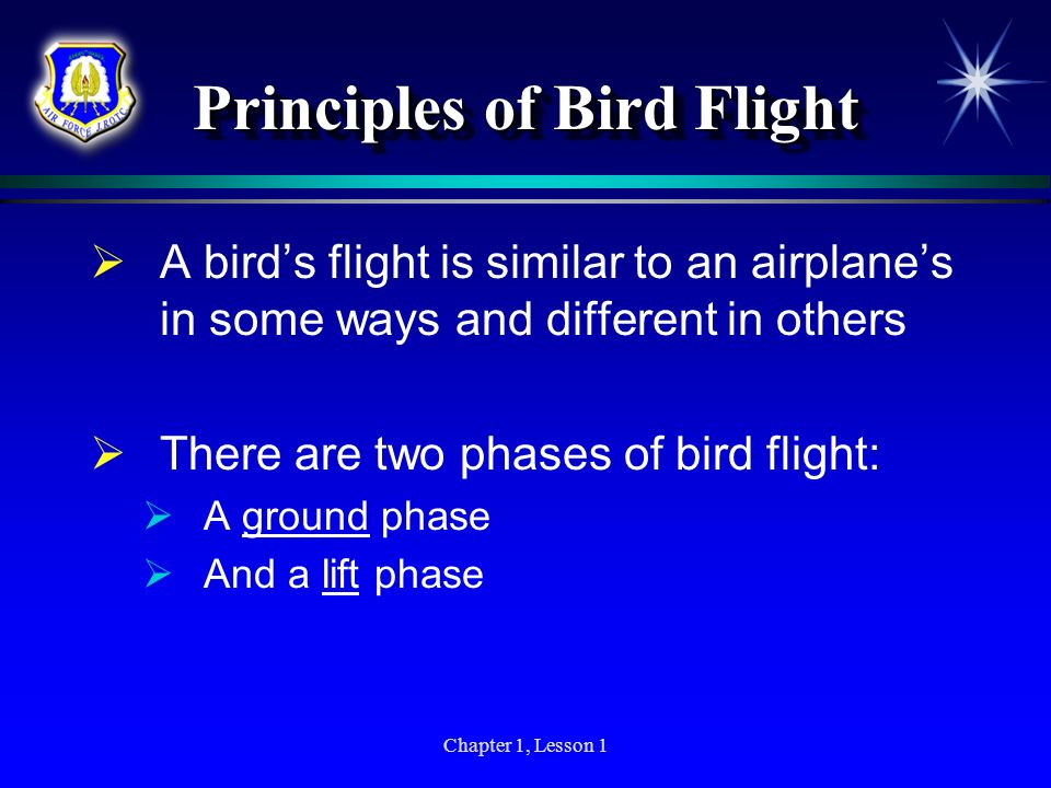 Principles of Bird Flight