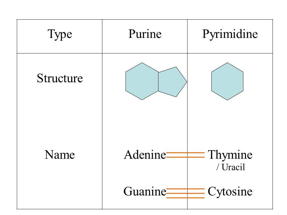 Type Purine Pyrimidine Structure Name Adenine Guanine Thymine Cytosine