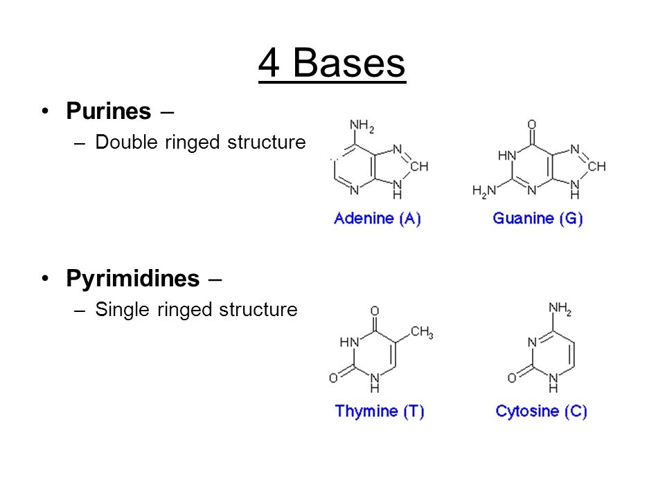 4 Bases Purines – Pyrimidines – Double ringed structure