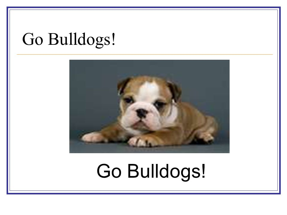 Go Bulldogs! Go Bulldogs!