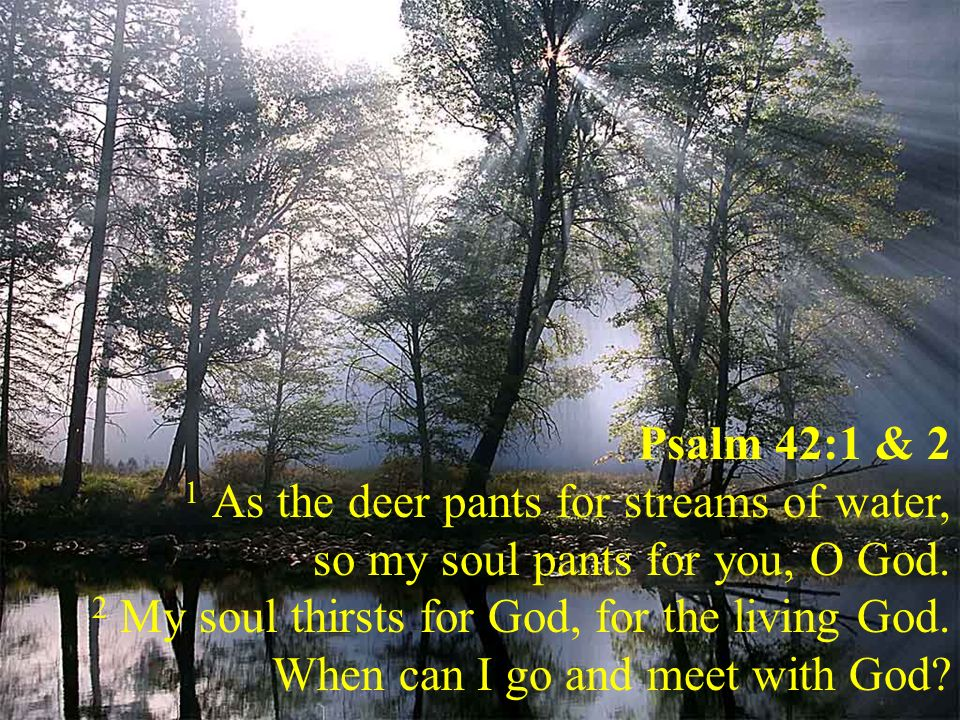 Psalm 42:1 & 2 1 As the deer pants for streams of water, so my soul pants for you, O God.