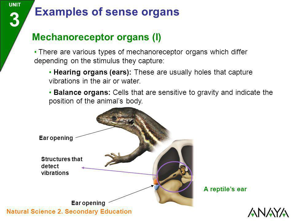 Examples of sense organs
