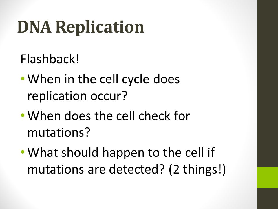 DNA Replication Flashback!