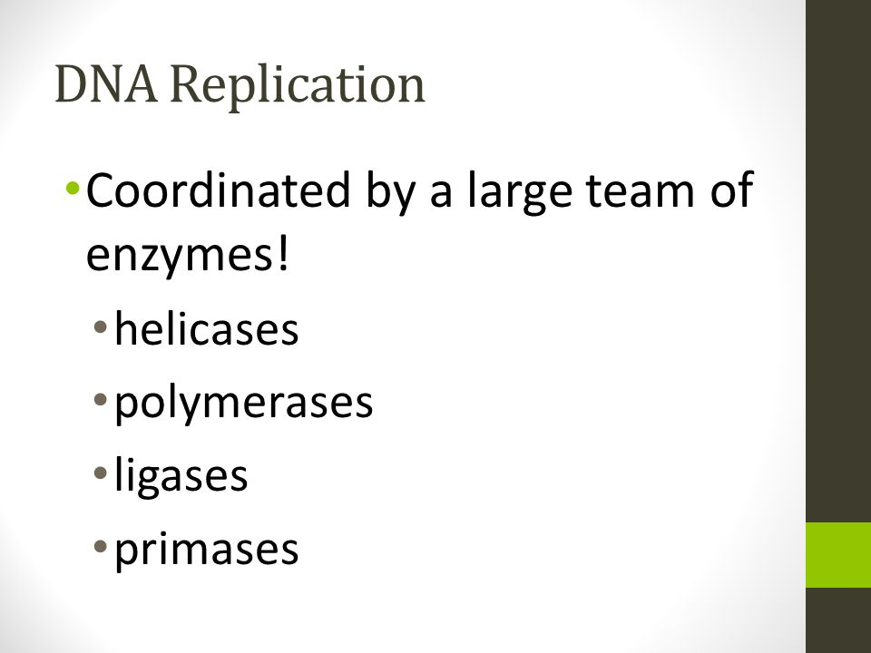 DNA Replication Coordinated by a large team of enzymes! helicases