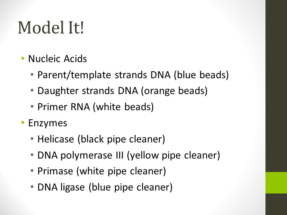 Model It! Nucleic Acids Parent/template strands DNA (blue beads)