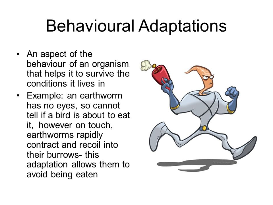 Behavioural Adaptations