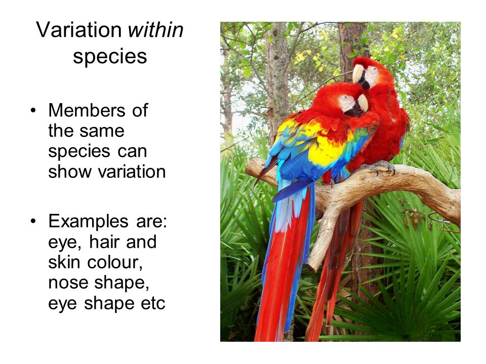 Variation within species