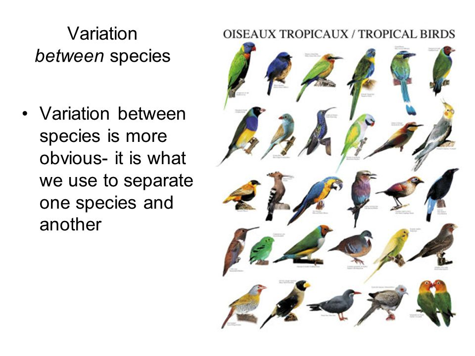 Variation between species