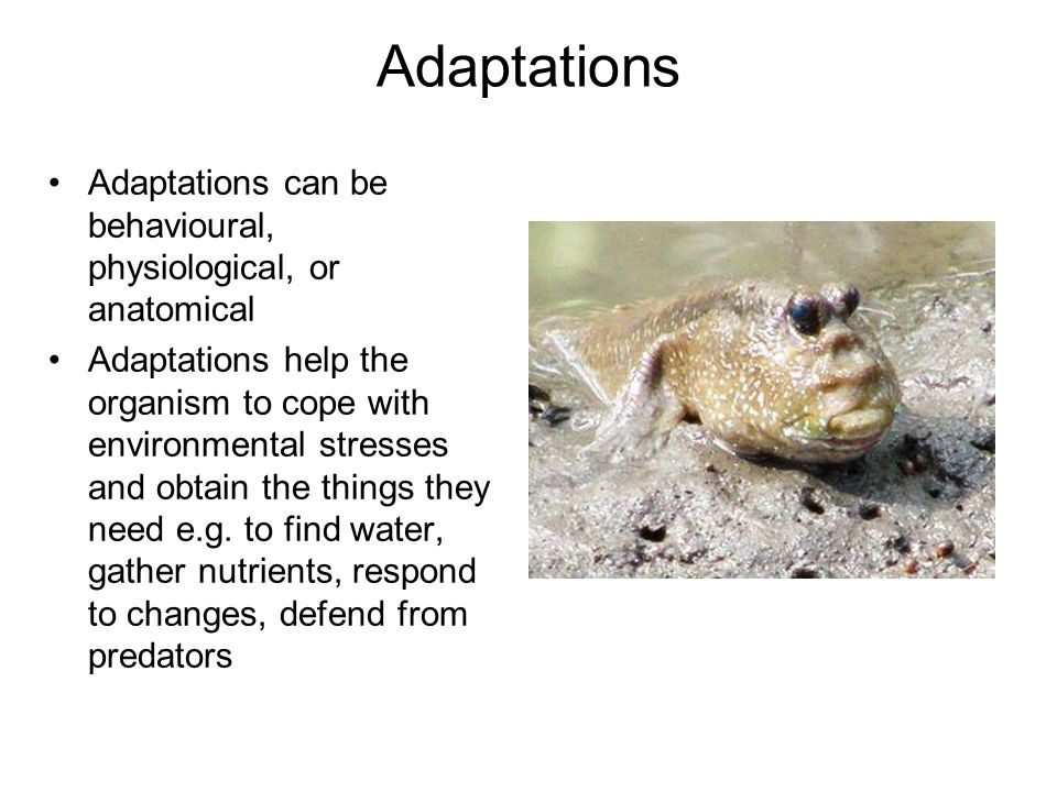 Adaptations Adaptations can be behavioural, physiological, or anatomical.