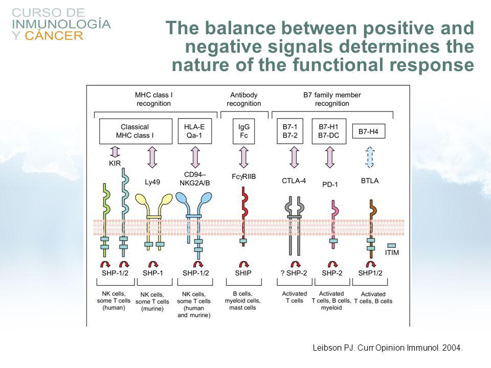 The balance between positive and negative signals determines the nature of the functional response