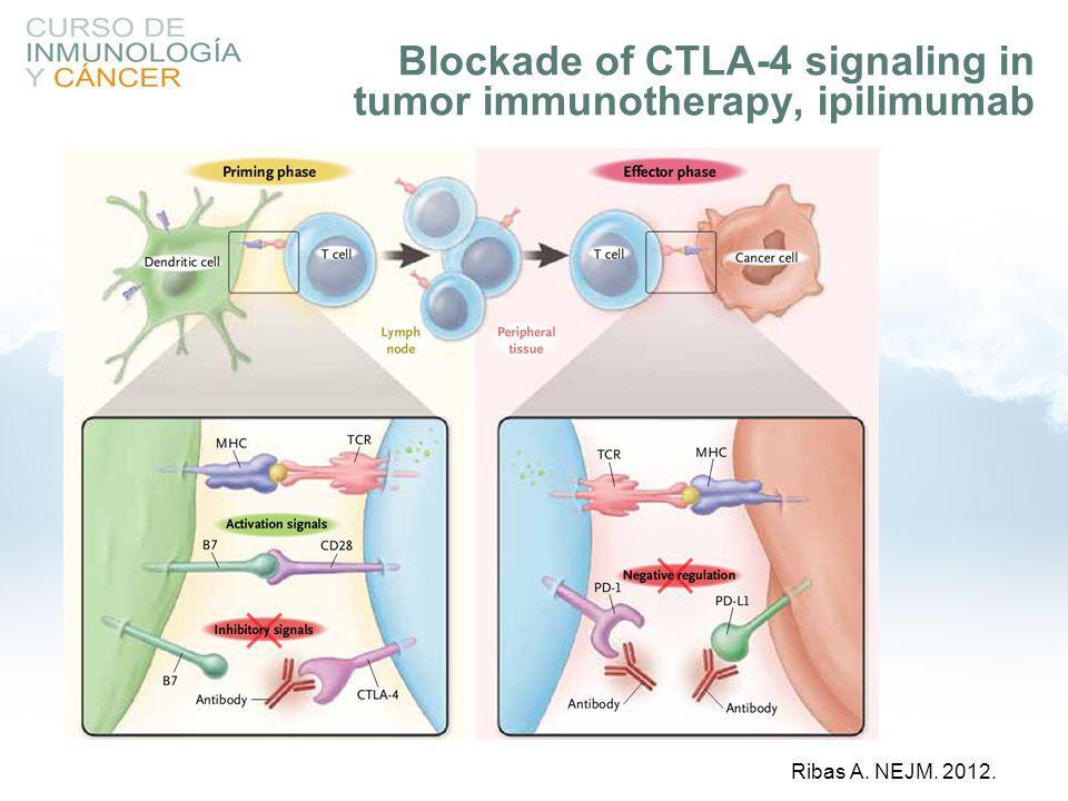 Blockade of CTLA-4 signaling in tumor immunotherapy, ipilimumab