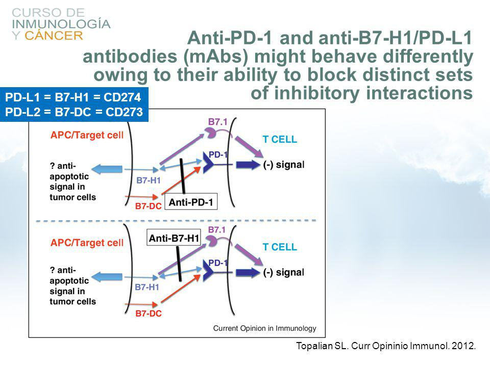 Anti-PD-1 and anti-B7-H1/PD-L1 antibodies (mAbs) might behave differently owing to their ability to block distinct sets of inhibitory interactions