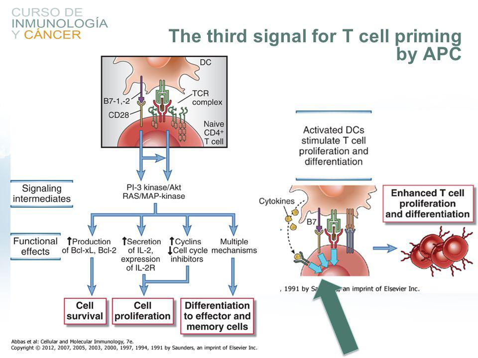 The third signal for T cell priming by APC