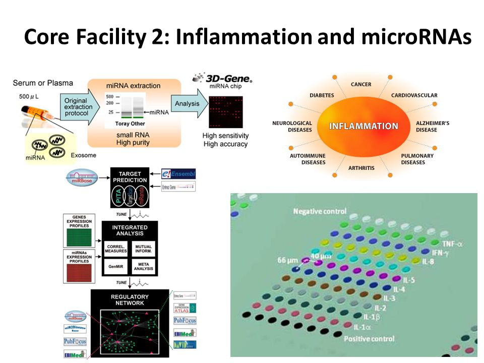 Core Facility 2: Inflammation and microRNAs