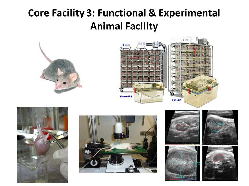 Core Facility 3: Functional & Experimental Animal Facility