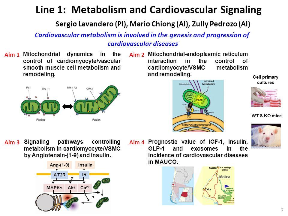 cardiovascular diseases