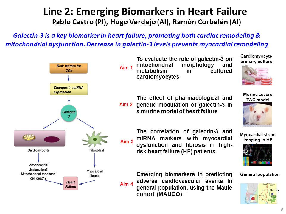Line 2: Emerging Biomarkers in Heart Failure