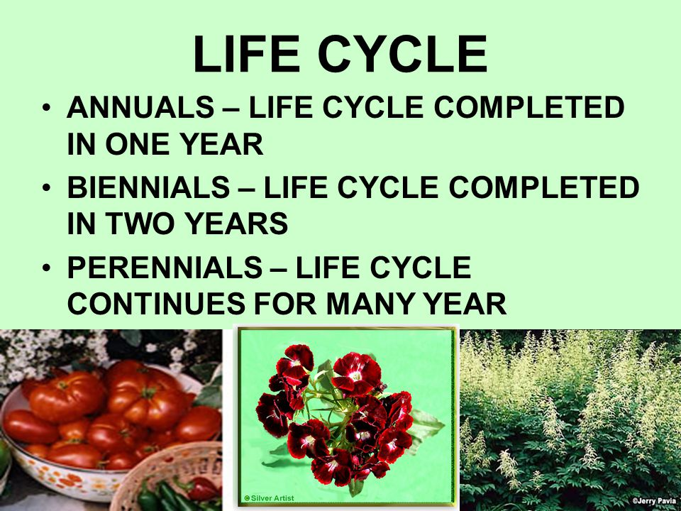 LIFE CYCLE ANNUALS – LIFE CYCLE COMPLETED IN ONE YEAR