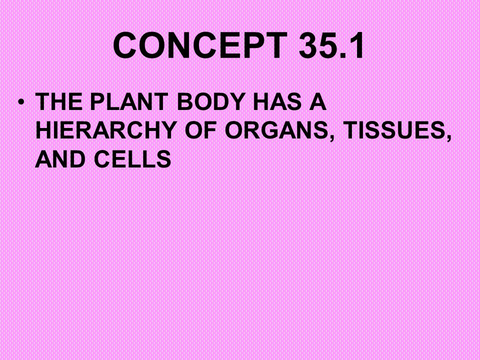 CONCEPT 35.1 THE PLANT BODY HAS A HIERARCHY OF ORGANS, TISSUES, AND CELLS