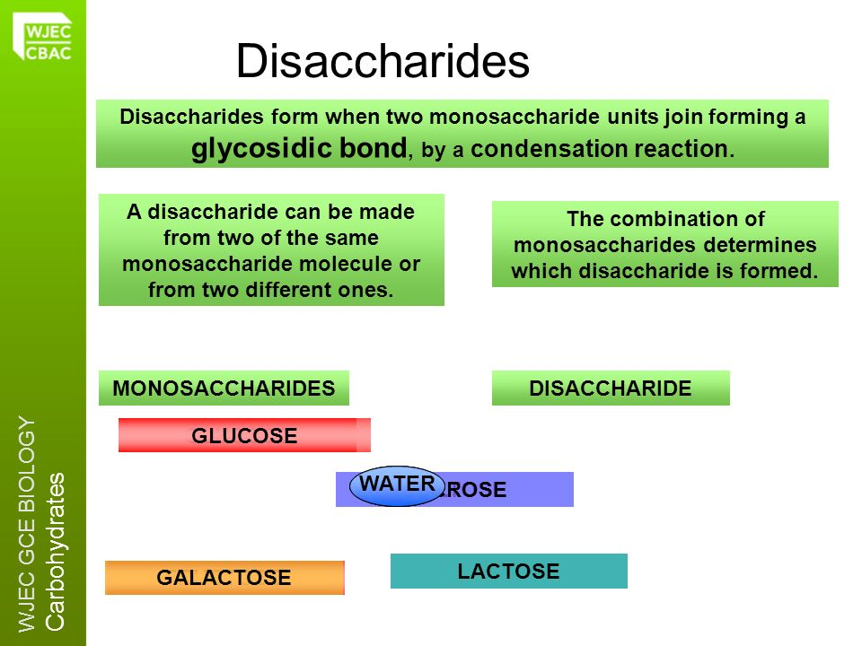 Disaccharides Disaccharides form when two monosaccharide units join forming a glycosidic bond, by a condensation reaction.