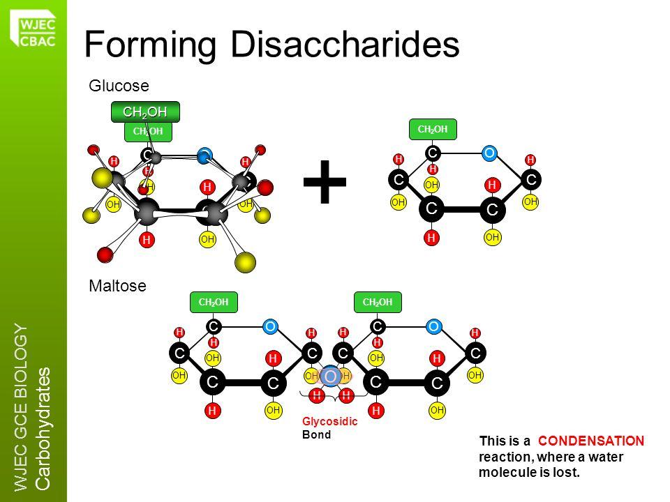 Forming Disaccharides