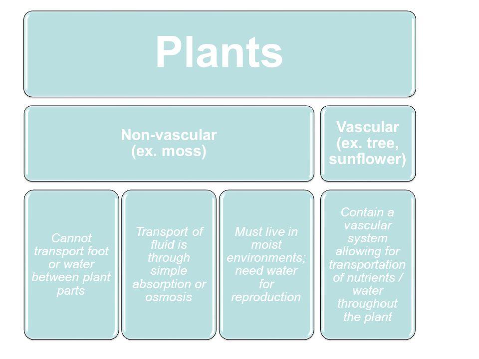 Non-vascular (ex. moss) Vascular (ex. tree, sunflower)