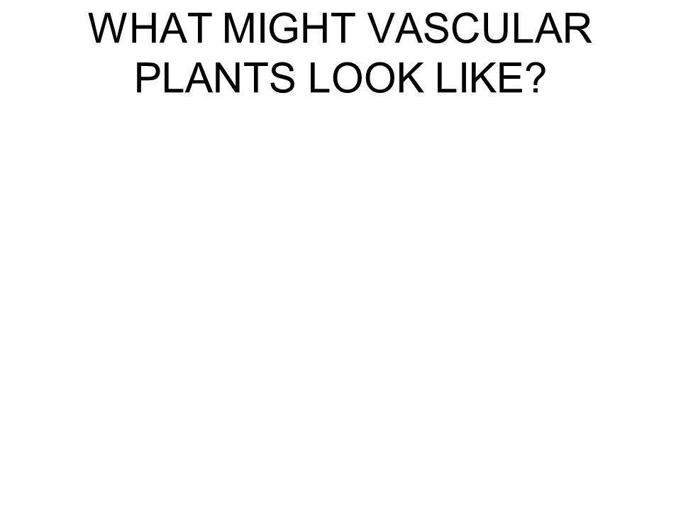 WHAT MIGHT VASCULAR PLANTS LOOK LIKE