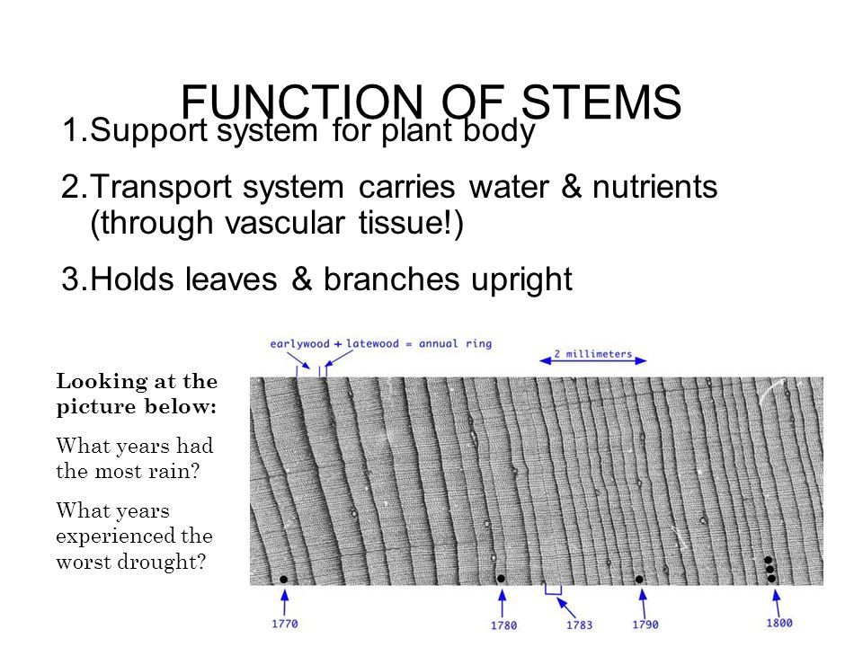 FUNCTION OF STEMS Support system for plant body
