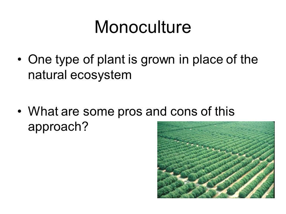 Monoculture One type of plant is grown in place of the natural ecosystem.