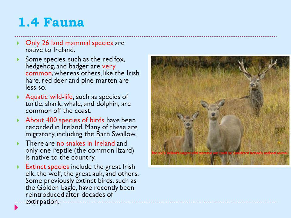 1.4 Fauna Only 26 land mammal species are native to Ireland.