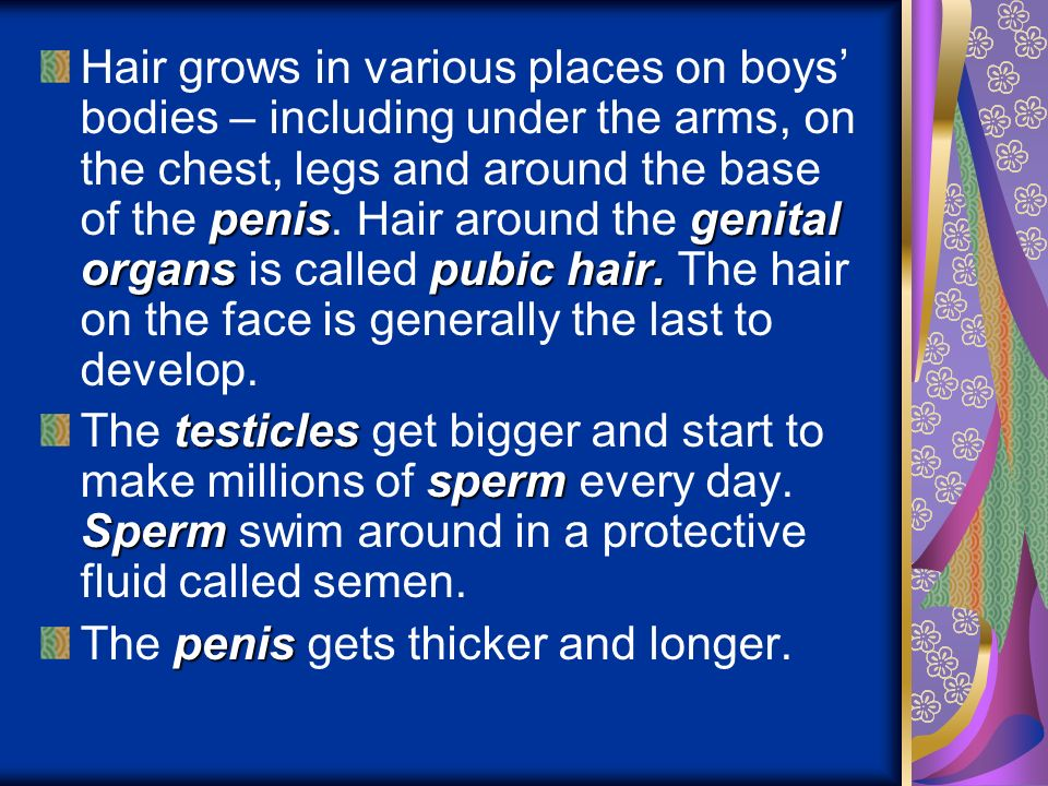 Hair grows in various places on boys' bodies – including under the arms, on the chest, legs and around the base of the penis. Hair around the genital organs is called pubic hair. The hair on the face is generally the last to develop.