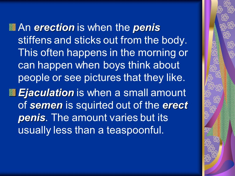 An erection is when the penis stiffens and sticks out from the body
