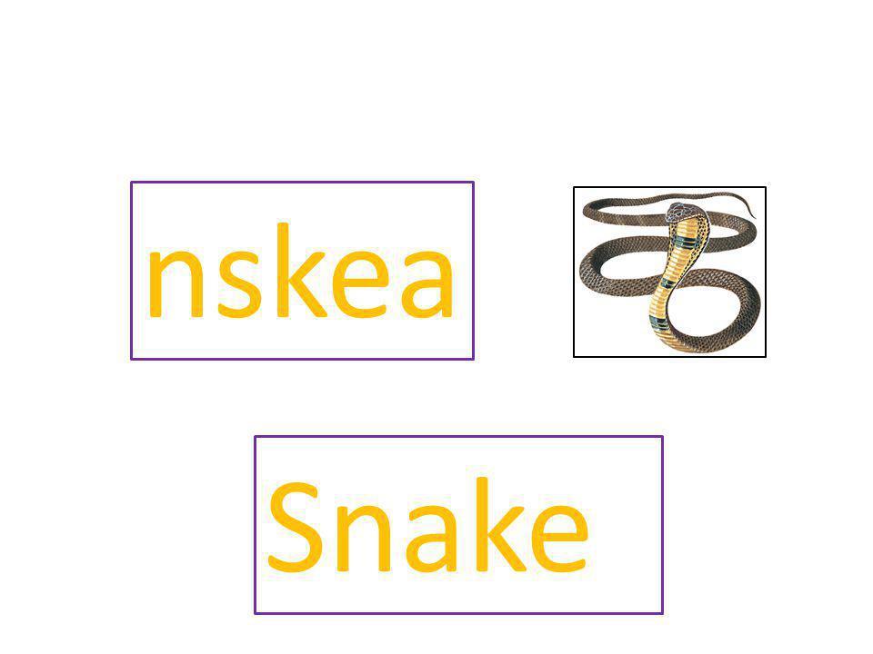 nskea Snake