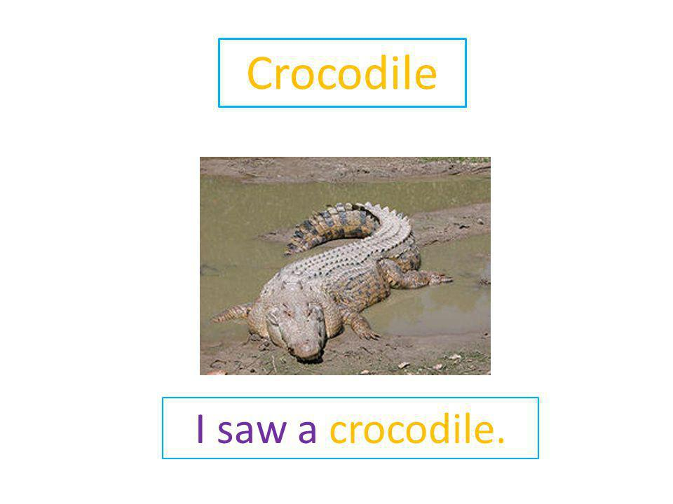 Crocodile I saw a crocodile.
