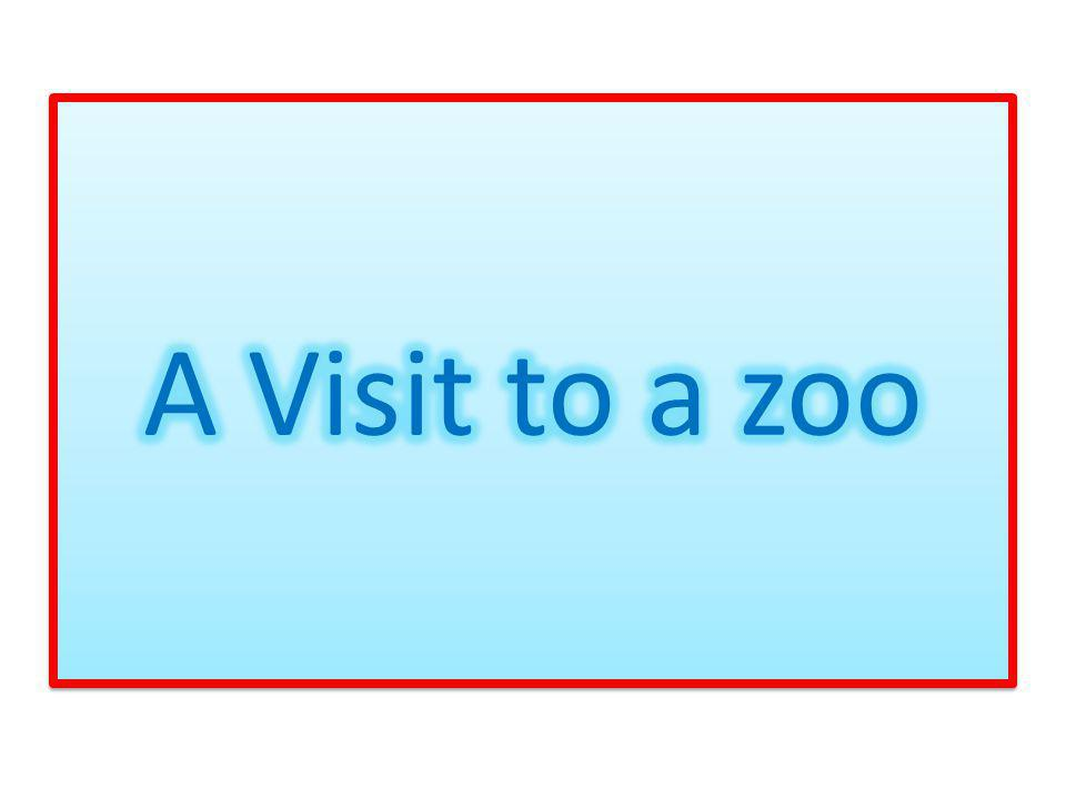 A Visit to a zoo
