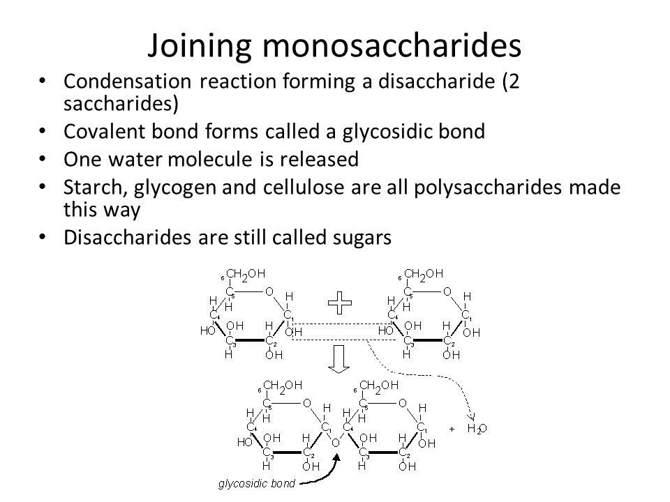 Joining monosaccharides