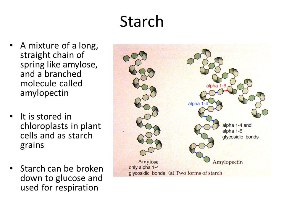 Starch A mixture of a long, straight chain of spring like amylose, and a branched molecule called amylopectin.