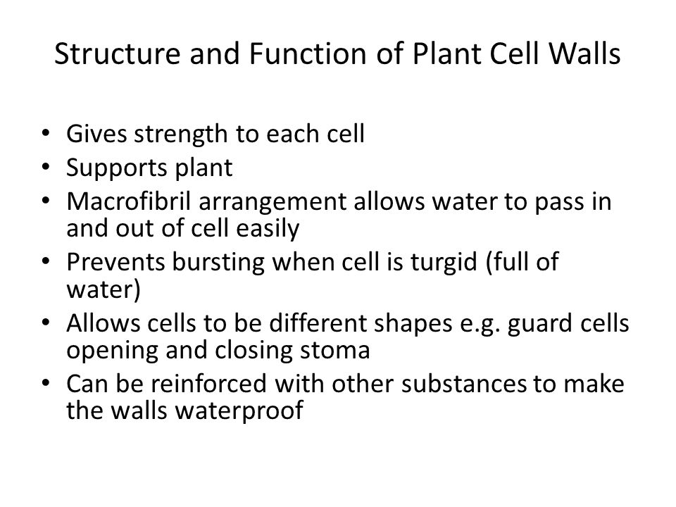 Structure and Function of Plant Cell Walls