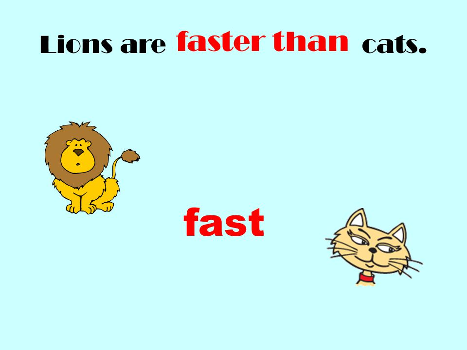 Lions are cats. faster than fast