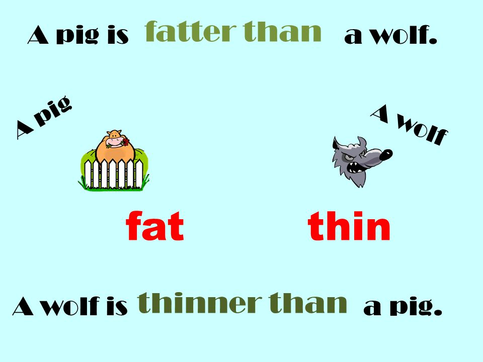 fat thin fatter than thinner than A pig is a wolf. A wolf is a pig.