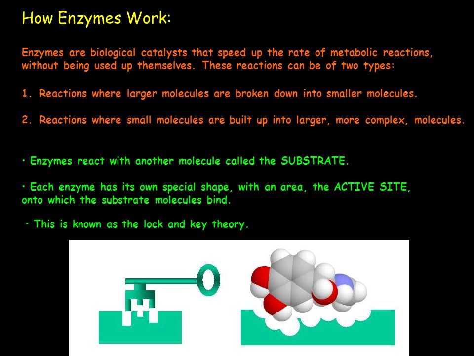How Enzymes Work: