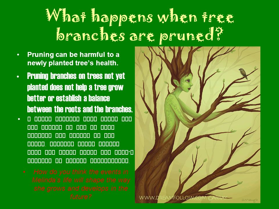 What happens when tree branches are pruned