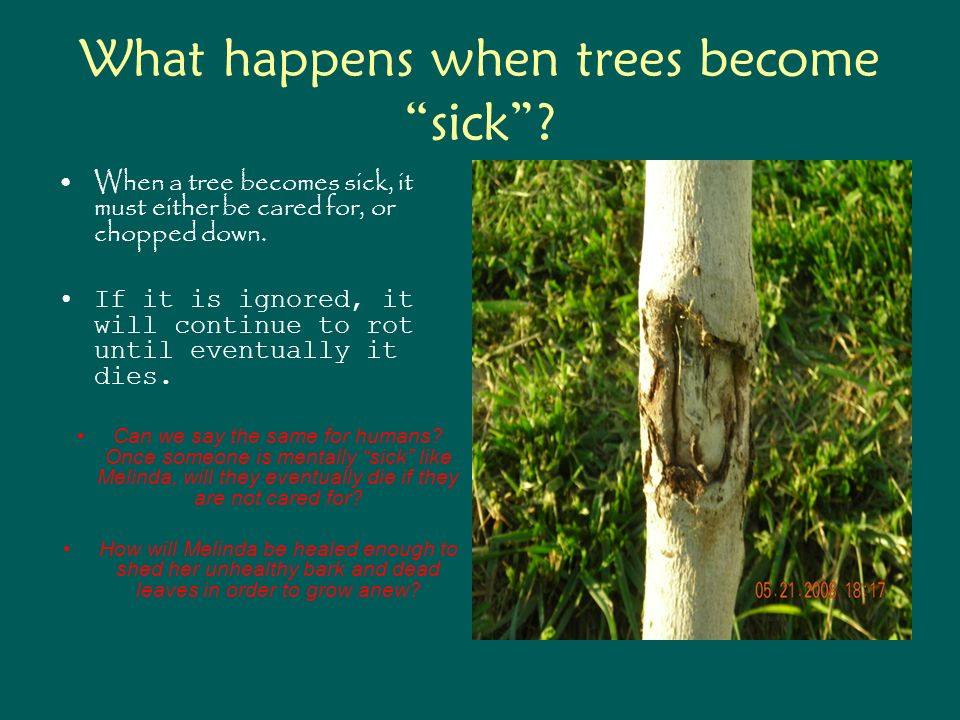 What happens when trees become sick