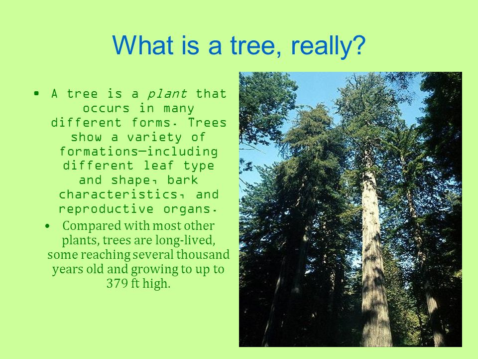 What is a tree, really