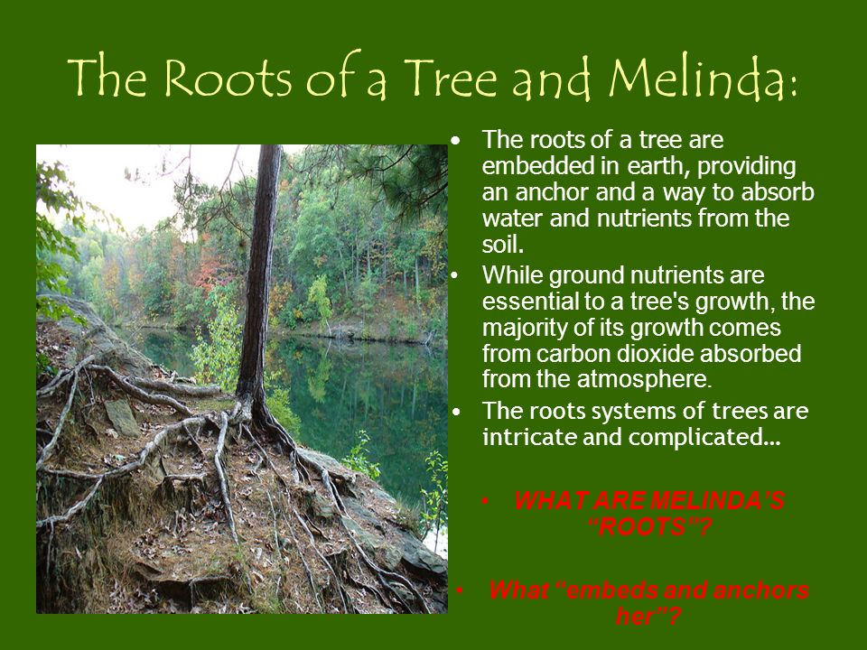 The Roots of a Tree and Melinda: